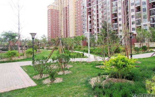 北京金隅花石匠项目景观绿化工程