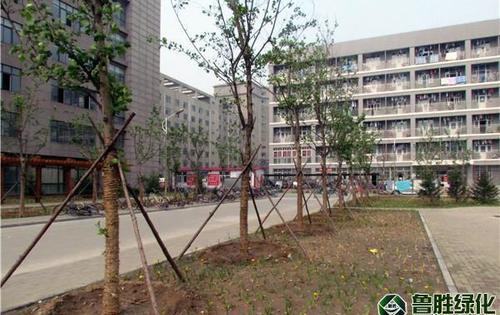 河北省唐山师范学院北校区绿化工程