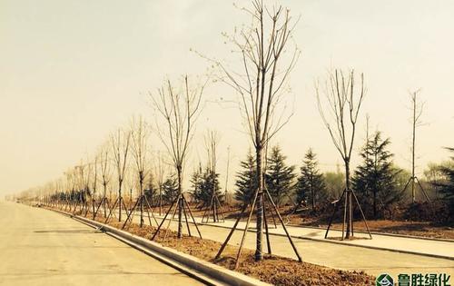 青岛即墨盟旺山公园及市政道路绿化项目