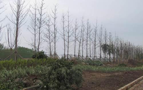 临沂市河东区汤泉路市政道路绿化项目