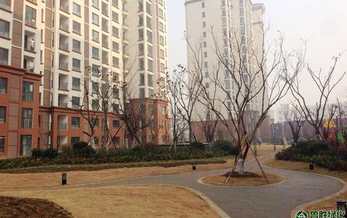 临沂荣盛地产锦绣外滩(沂河官邸)绿化项目