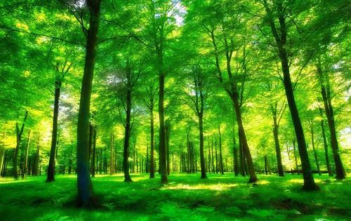 树木长得越快寿命就越短 新研究提出地球森林碳汇或需重估